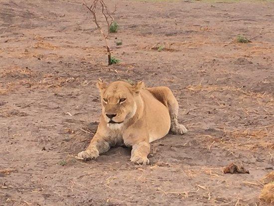 Moremi Wildlife Reserve: photo2.jpg