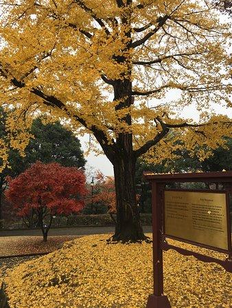 Jinju, South Korea: photo8.jpg