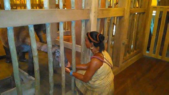 Williamstown, KY: Ark display