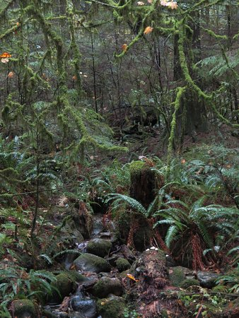 North Vancouver, Canada: Beautifull rain forest at Lynn Canyon Park