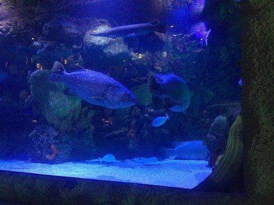 Aquarium Restaurant: photo1.jpg