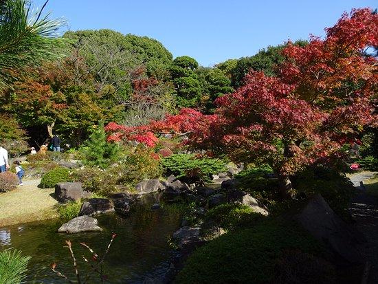 Hayama-machi, Japón: 紅葉が始まった庭園