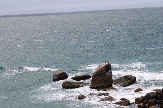 Observacao De Baleias: Parecem pinguins na pedra!