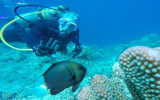 Rakiraki, Fiyi: Scuba diver on Mellow Yellow