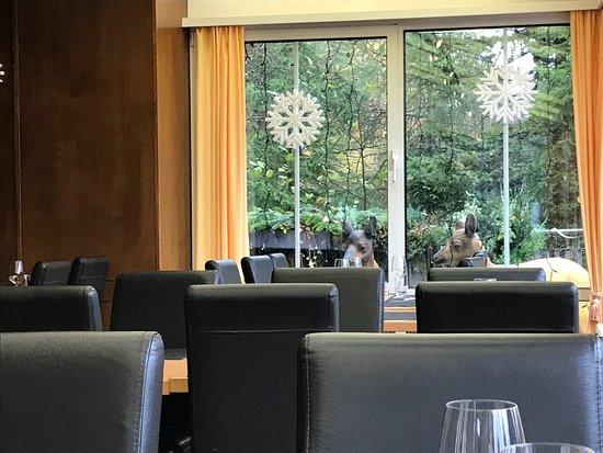 Uetliberg, Schweiz: Wintergarten