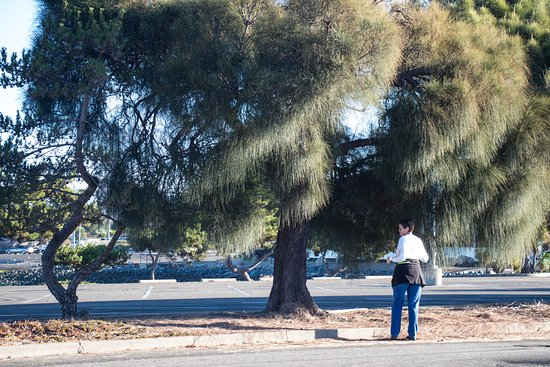 San Leandro, CA: Trees like this one surround the area.