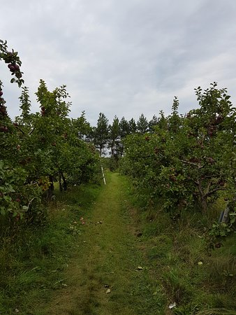 Notre-Dame-de-l'Ile-Perrot, Canada: Apple picking