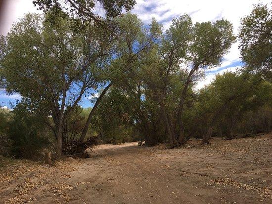Wickenburg, AZ: photo1.jpg