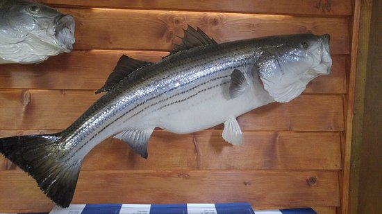 Madill, OK: Country Kitchen Stripped Bass (I'm Jealous)