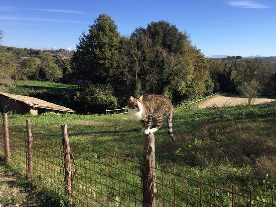 Campagnano di Roma, Italia: Cat
