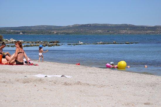 Istres, Fransa: Приплыли лебеди