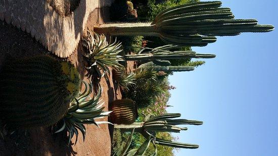 Marrakech-Tensift-El Haouz Region, Marocko: coin des cactus