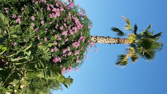Marrakech-Tensift-El Haouz Region, Marocko: un coin du jardin