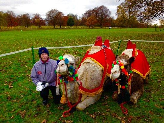 Joseph's Amazing Camels: Joseph' Camels.
