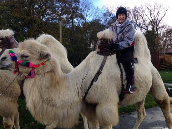 Joseph's Amazing Camels: Joseph's Camels and me .