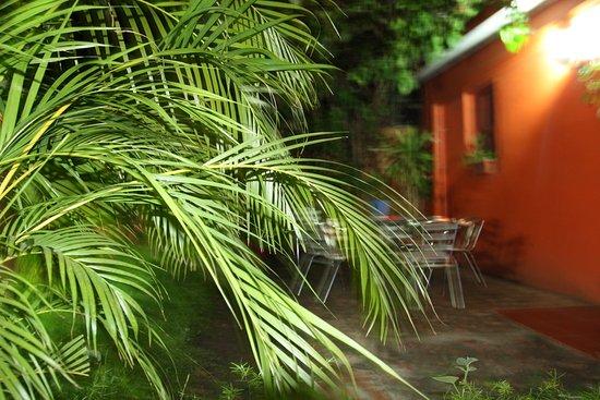 Hotel Villa Angelo: Завтрак под пальмами на улице. Жаль не застали.