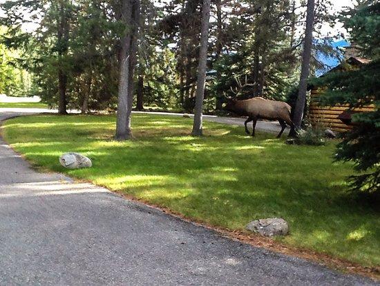 Zdjęcie Alpine Village Cabin Resort - Jasper
