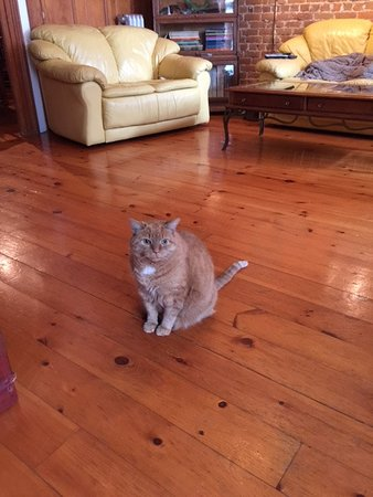 Hayden's Wexford House : Cashew greeting guests.