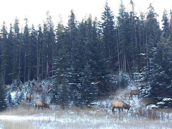 Banff Rocky Mountain Resort: photo1.jpg