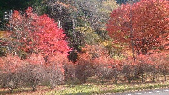 Sumatakyo Valley: DSC_0010_large.jpg