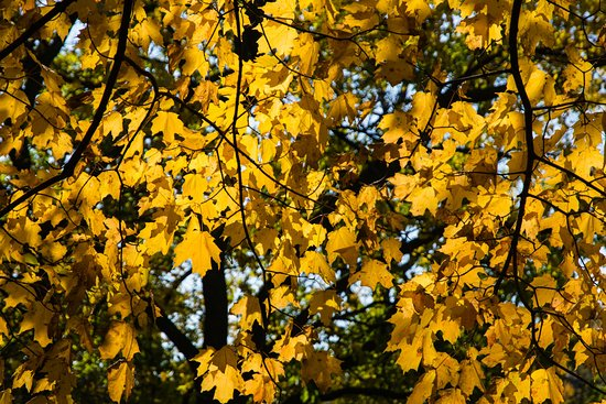 Kelleys Island, OH: Autumn Color at the Campgound