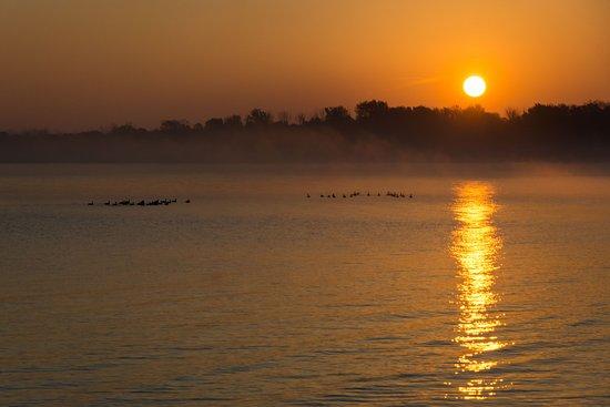 Kelleys Island, OH: Geese on a Misty Morning