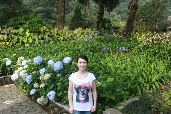 Западная Ява, Индонезия: цветочки