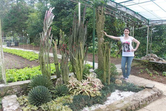 кактусы - Picture of Melrimba Garden, West Java - TripAdvisor