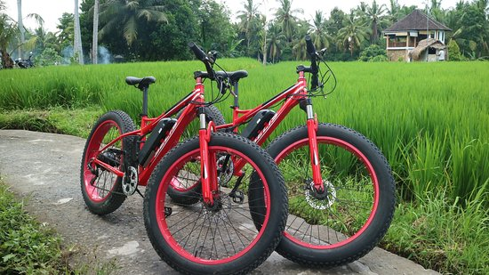 8c798dade386c4 Bali E-Bike Tours (Ubud)  UPDATED 2019 All You Need to Know Before ...
