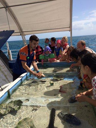 Cairns Region, Australia: Marine touch tank
