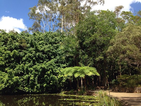 how to get from cooroy to noosa