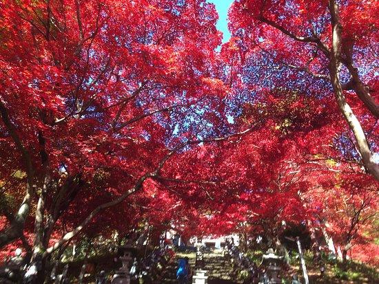 Isehara, Japan: photo2.jpg