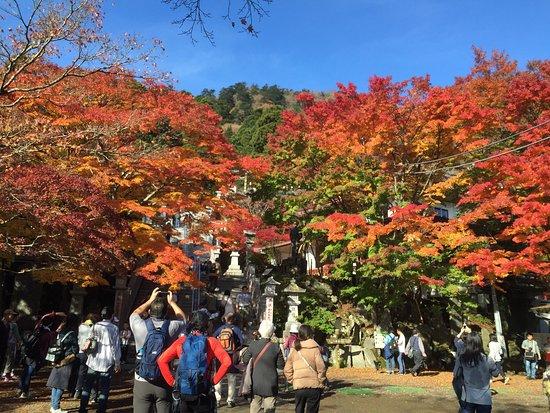 Isehara, Japan: photo4.jpg