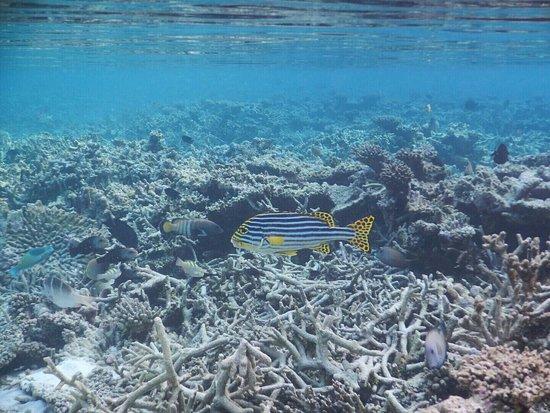 North Ari Atoll: photo5.jpg