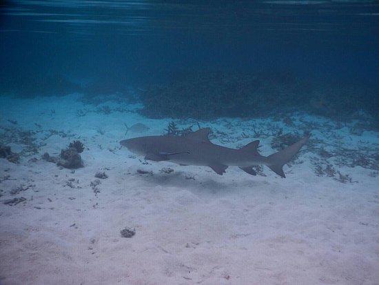North Ari Atoll: photo7.jpg
