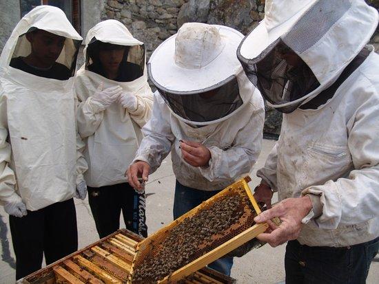 """Guillestre, Prancis: Atelier Consom'acteur """"apiculture"""""""