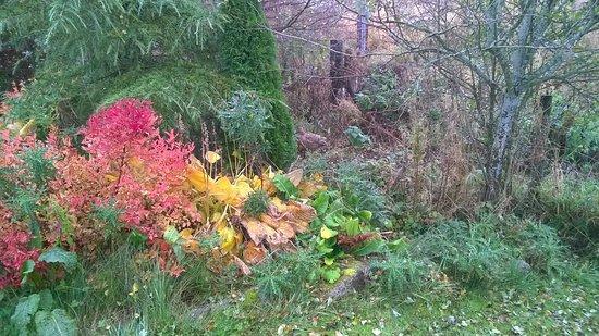 Spittal of Glenshee, UK: Local grouse making a visit