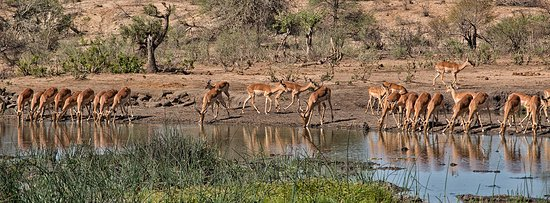 Timbavati Private Nature Reserve, Güney Afrika: view of the waterhole from the camp of the
