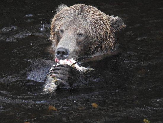 Grizzly Bear Lodge & Safari: photo3.jpg