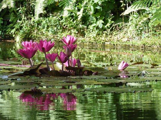 Jardin Botanique Deshaies Picture Of Jardin Botanique De Deshaies