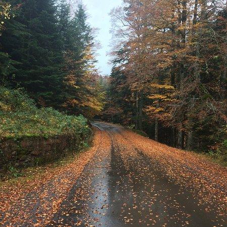Hecho, Spain: La selva de oza expectacular en otoño!