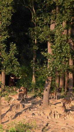 Asteya Kanha: Muba At Mukki, Kanha