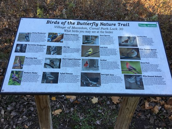 Macedon, Nowy Jork: Butterfly Nature Trail - types of birds found here