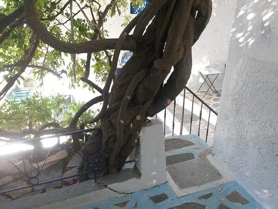 Pagali Hotel 사진