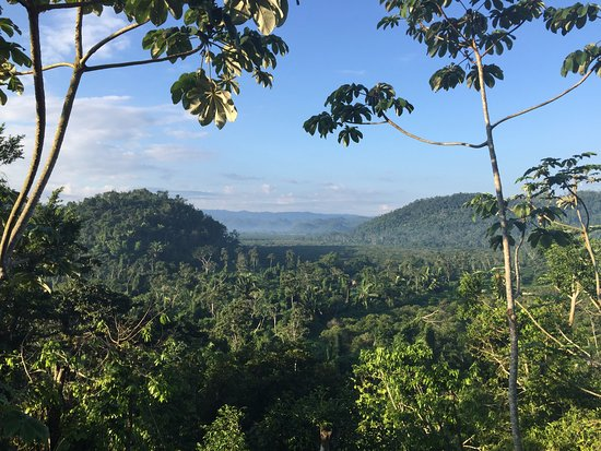 Ian Anderson's Caves Branch Jungle Lodge: View from upper outdoor deck of canopy treehouse