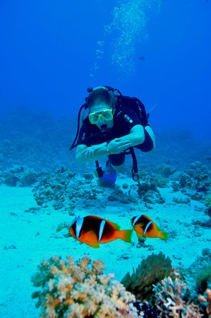 Finding nemo at temple reef picture of reef oasis dive - Reef oasis dive club ...