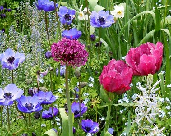 Kennett Square, PA: Spring flowers