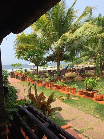 Palm Tree Heritage: photo2.jpg