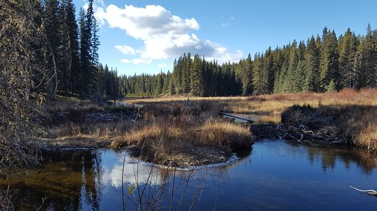 Nordegg, Canada: Shunda Creek along our backyard trail