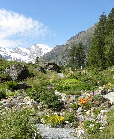 Giardino Botanico Alpino Paradisia Cogne 2018 O Que